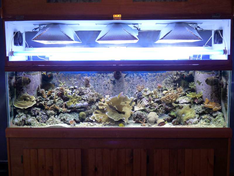 lets see those canopies Aquarium Advice Aquarium Forum Community
